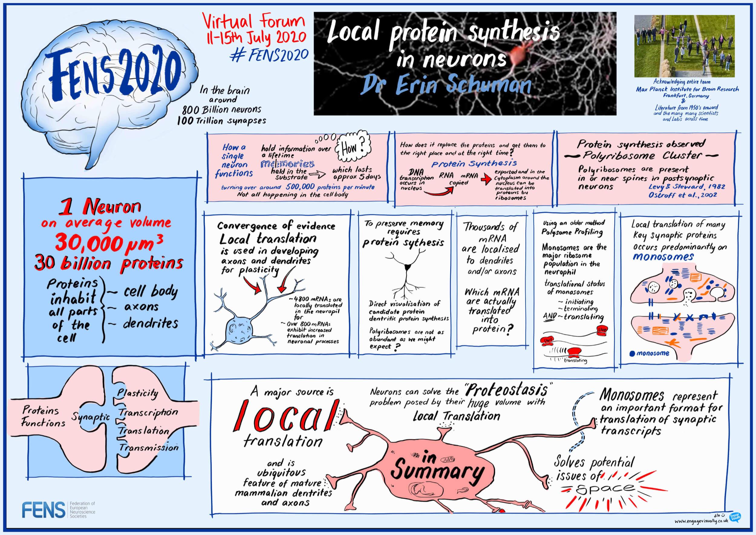 """Local protein synthesis in neurons"" Erin Schuman (DE)"