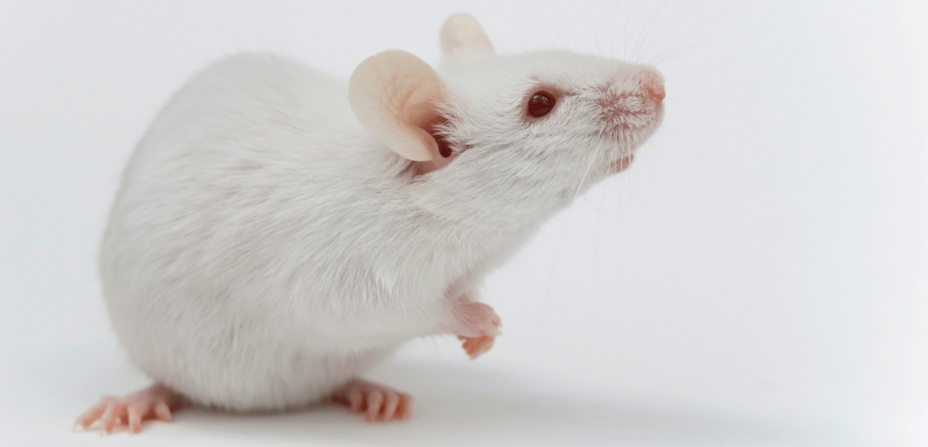 How FENS supports responsible animal research