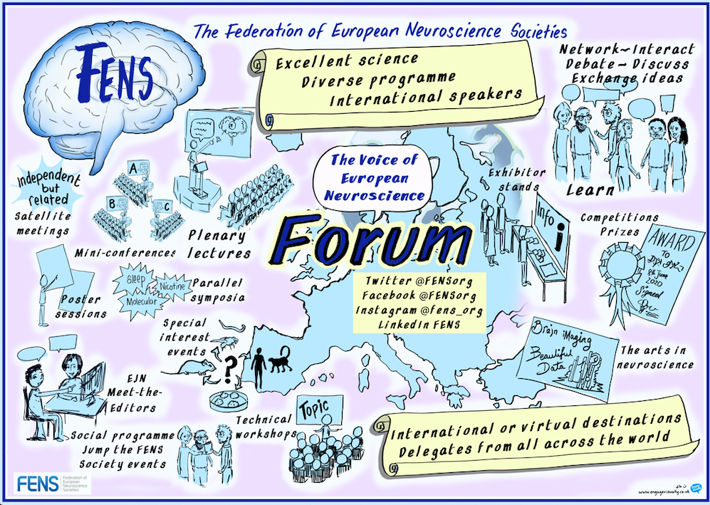 The FENS Forum of neuroscience at a glance
