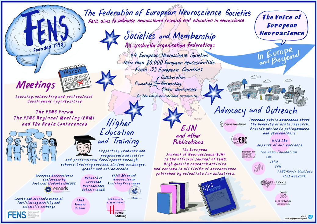 FENS at a glance